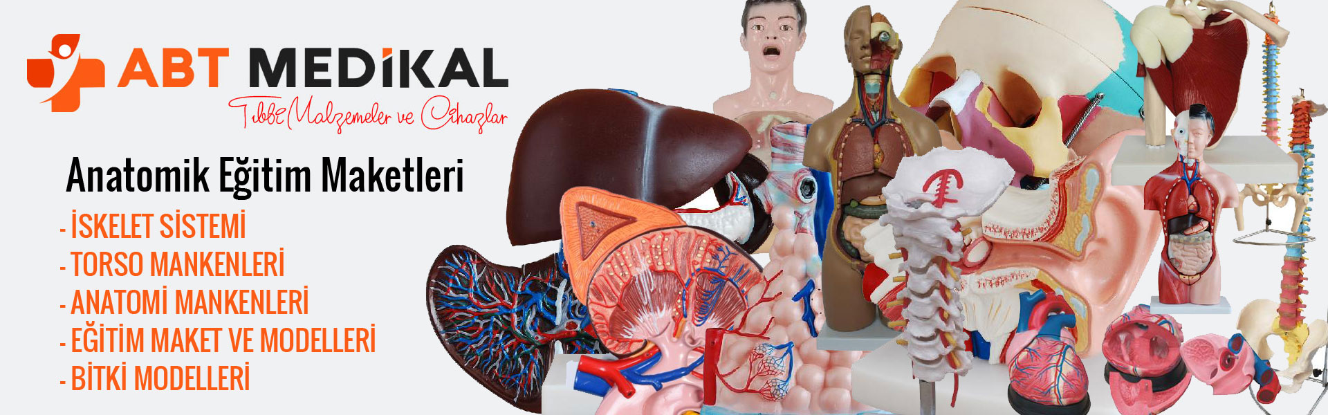 anatomik-egitim-maketleri-toptan-ve-parekende-satisi